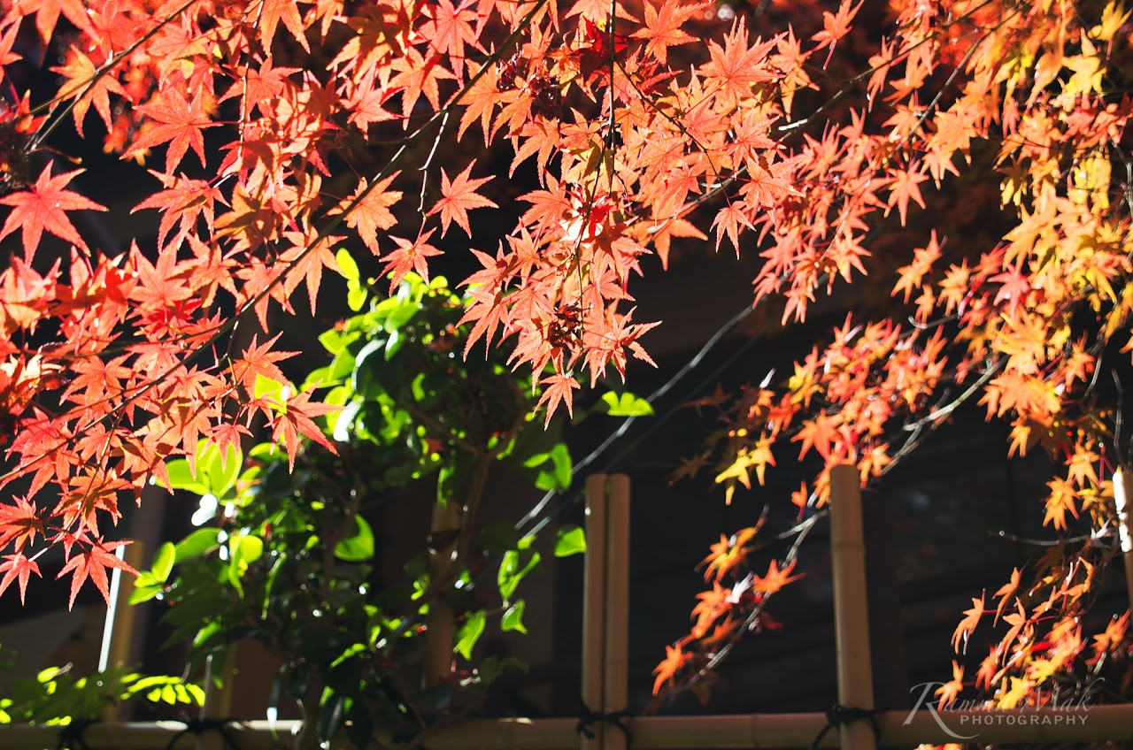 2016秋遊京都の東福寺賞楓