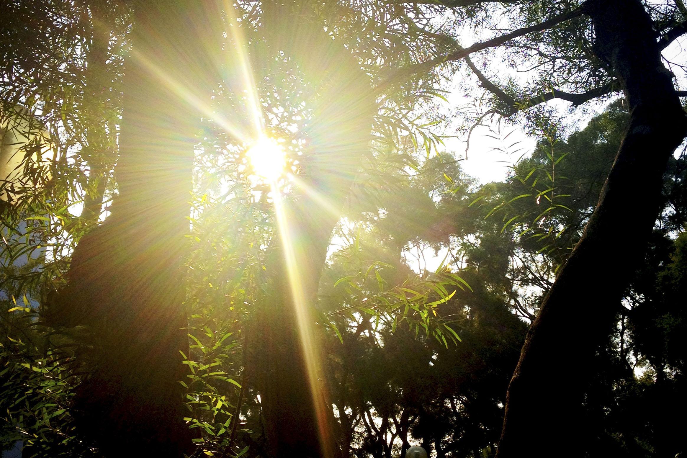 從陽光空氣開始,為何我們可以享用大自然的供應呢?