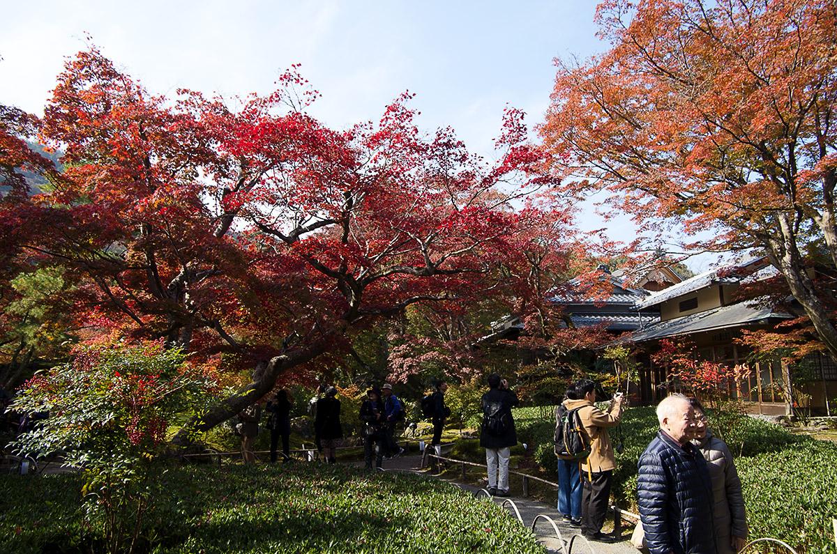 2017暢遊京都、琵琶湖——寶嚴院賞紅葉